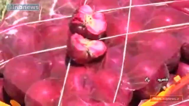 برداشت سیب تو سرخ در سمنان