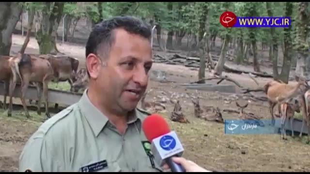 آشنایی پناهگاههای معروف حیات وحش استان مازندران