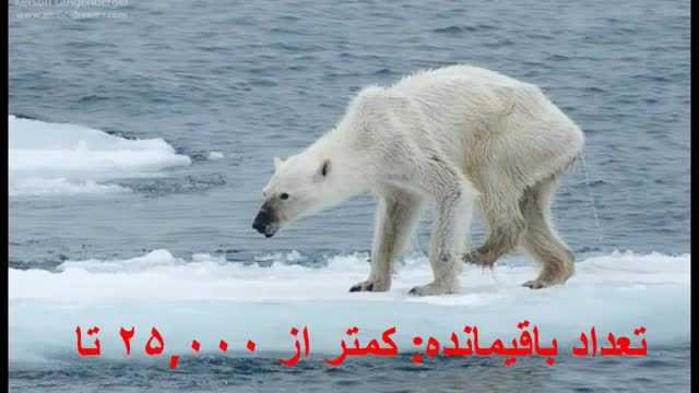 10 حیوان که در معرض انقراض هستند  | TOP 10 Farsi