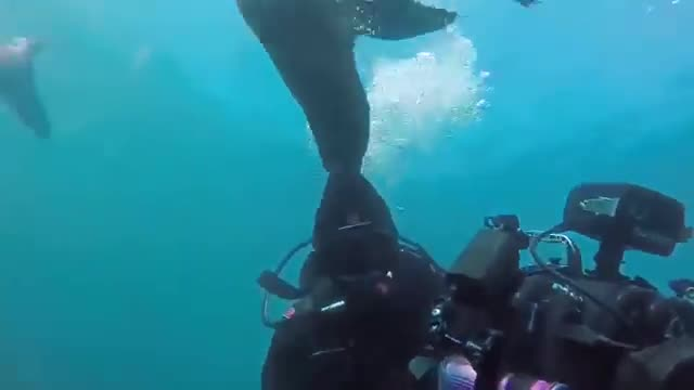 گلچینی از حمله حیوانات آبی و دریایی