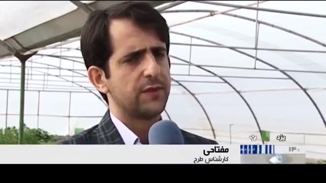Iran Herbal Plants cultivation, Yazd province کاشت گیاهان دارویی استان یزد ایران