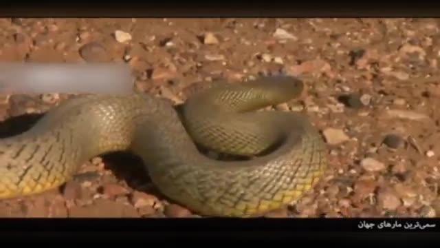 معرفی 5 گونه از سمی ترین مارهای روی زمین