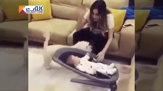 عکس العمل سگ به کتک خوردن دورغی کودک به دست مادر !!