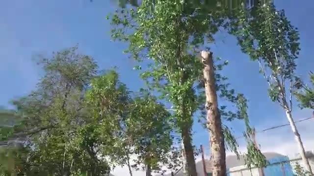جابجایی درخت به جای قطع درخت و کاهش فیش فضای سبز شهرداری نجات درخت نجات زندگیست بزرگترین مرکز تخصصی