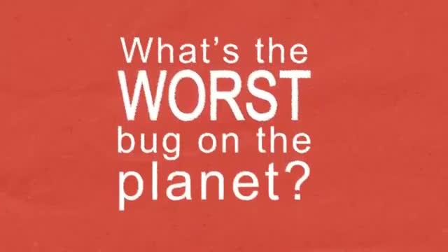 پشه، مرگبارترین حشرهی روی زمین