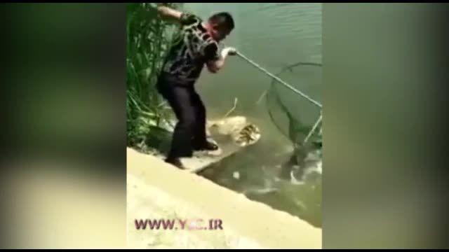 فرار جالب ماهیها از چنگ ماهیگیر چینی با روشی عجیب برای شکار ماهی ها