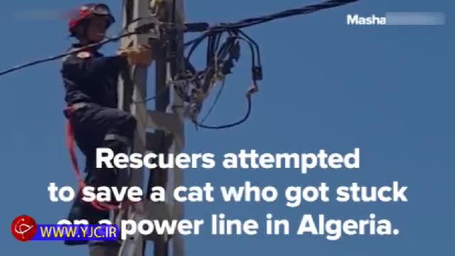 نجات گربه گیر کرده روی کابل برق فشارقوی توسط آتش نشانان