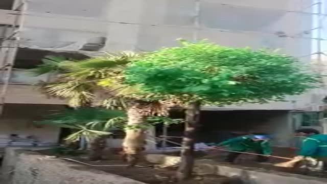 شرکت جابجایی درختان شهرداری و کاشت انواع نهال و درخت