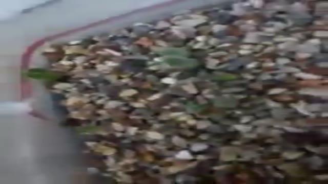 کشت بذر کاکتوس قسمت دوم