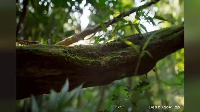 کلیپی دیدنی و جالب از حیات وحش ماداگاسکار