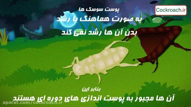 زندگی سوسک ها