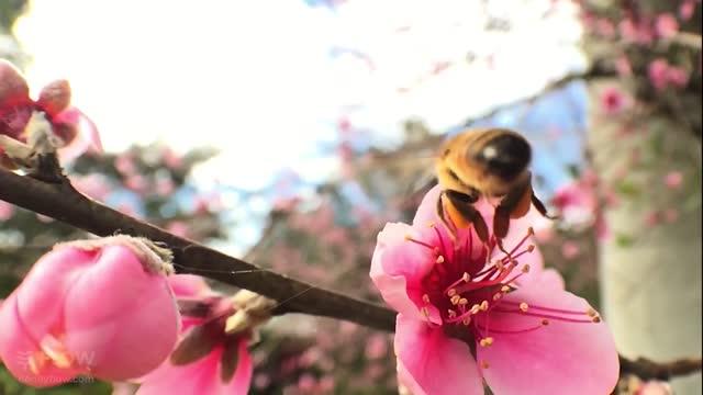 زنبور چطور شهد را به عسل تبدیل می کند؟(عسل طبیعی نصیری) (دیجی عسل)