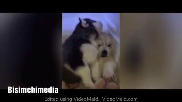 نگه داری از سگ (شکنجه دادن سگها)