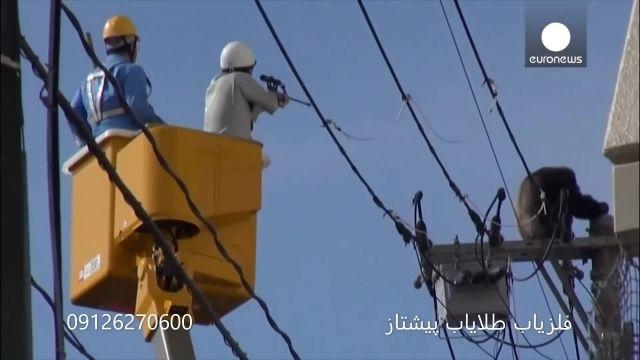 حیوانات در شهر