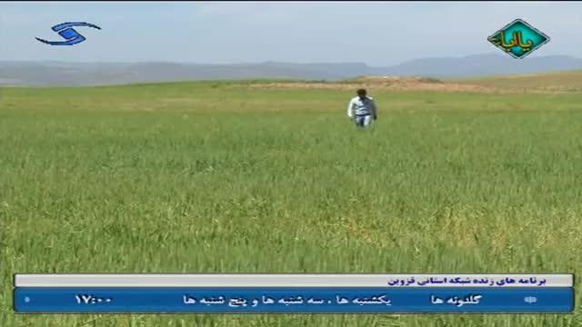 روستای شنازند -  استان قزوین