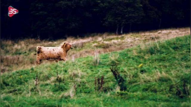 سفری به اسکاتلند (Scotland) دومین کشور بزرگ بریتانیا