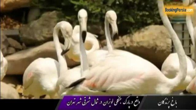 باغ پرندگان لویزان، جایگاه زیباترین پرندگان ایران - بوکینگ پرشیا