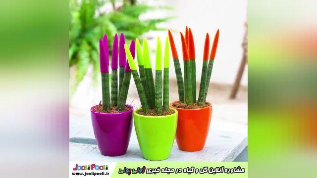 مشاوره رایگان گل و گیاه+ مشاوره آنلاین گیاهان آپارتمانی