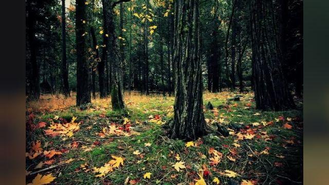 تصاویر مبهوت کننده از پاییز  پارک ملی یوسیمیتی آمریکا را با کیفیت HD ببینید!