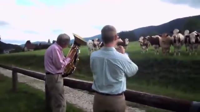 واکنش عجیب و فوق العاده حیوانات به موسیقی